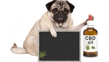 Humans are Trying CBD Products. What About Your Dog?