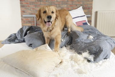 How to Stop Your Pets from Destroying Your House