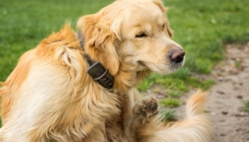 10 Tips to Help Prevent Flea Bites on Dogs