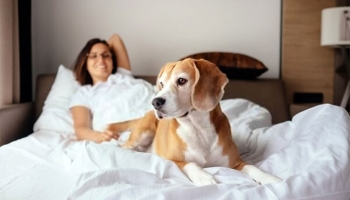Top 7 Dog-Friendly Destinations in the UK