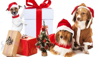TOP 10 GREAT DOG GIFTS FOR CHRISTMAS! 2017