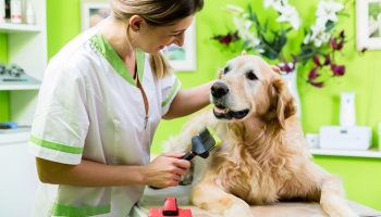5 Pet Grooming Tips You Should Know