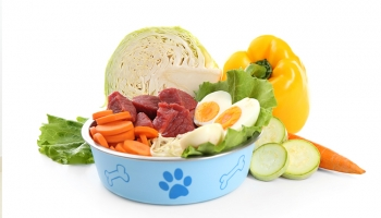 Dog Nutritional Requirements: Guide to Understand Your Dog's Diet Needs