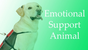 Everything You Need to Know about Emotional Support Animal