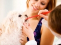 Take Care of Your Pet's Pearly Whites: Your Guide to Brushing Your Dog's Teeth