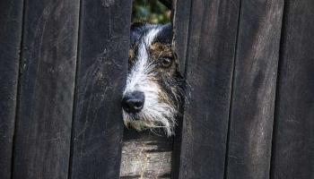 10 Effective Ways to Treat Dog Depression