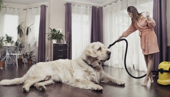 Tips For Keeping Your Home Clean As A Dog Owner