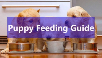 How to Feed Puppies | Puppy Feeding Guide