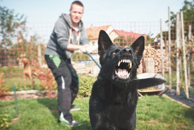 The most important things to bear in mind when training aggressive dogs